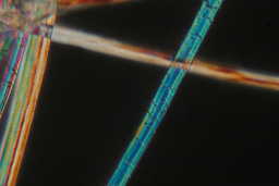 Ramie fiber, microscopic view.