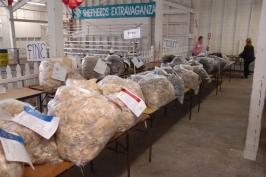 Bags of Romney fleeces on tables.