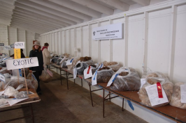 Tables of Shetland fleeces, North American Shetland Sheepbreders Association.